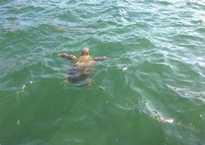 Turul Insulelor Ionian
