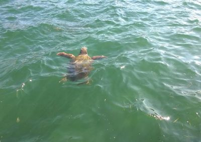 Ionian Island Tour